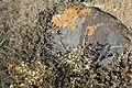 LichenOnRock.jpg