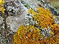 Lichens on a boulder in a disused quarry - geograph.org.uk - 1042823.jpg