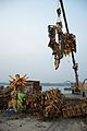 Lifting Immersed Durga Idol Remains - Baja Kadamtala Ghat - Kolkata 2015-10-22 6609.JPG