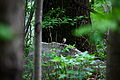Little-bird-on-a-rock - West Virginia - ForestWander.jpg