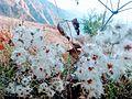 Little Flowers.jpg
