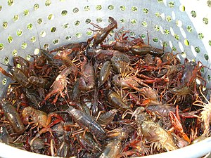 Seafood boil - Live Louisiana Crawfish in a strainer