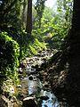 Live Oak Park, Cordonices Creek.jpg