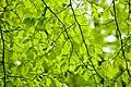 Lovely light green (4615550333).jpg