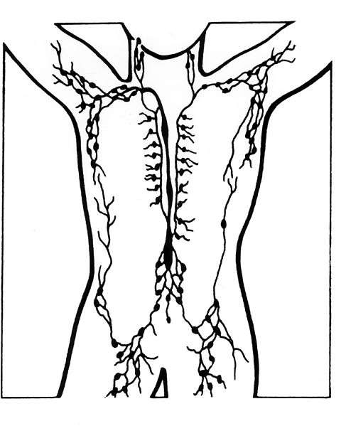 There are clusters of nodes under the arms, in the groin, neck and abdomen Lymph nodes illustration.jpg