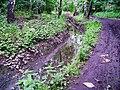 Měcholupský potok, v lesíku.jpg