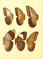 Macrolepidoptera15seit 0139.jpg