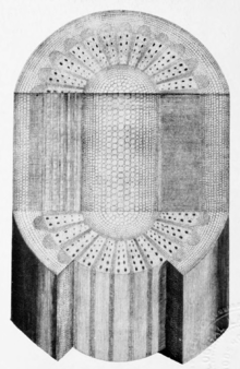 Makers of British botany, Plate 7 (plate from Grew's Anatomy) - right figure.png