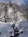 Maljen - Divčibare - srednji tok reke Bele Kamenice.jpg