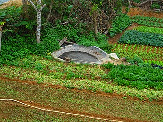 Organic fertilizer - A cement reservoir containing cow manure mixed with water. This is common in rural Hainan Province, China. Note the bucket on a stick that the farmer uses to apply the mixture.