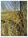 March Winter Tree Bahlingen - Master Seasons Rhine Valley Photography 2013 - panoramio.jpg