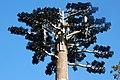 Mast Telathrebiaeth Y Felinheli Telecommunication Mast - geograph.org.uk - 578694.jpg
