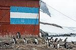 Mikkelsen Harbour-2016-Trinity Island (D'Hainaut Island)–Gentoo penguins (Pygoscelis papua) and Refugio Naval 02.jpg