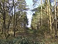 Mixed woodland - geograph.org.uk - 397543.jpg