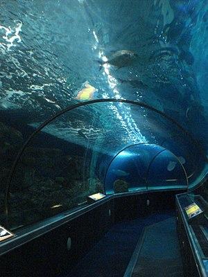 Sea Life Minnesota Aquarium - Shark tunnel at the aquarium