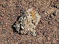 Montana Colorada - stone with lichen - Fuerteventura - 09.jpg