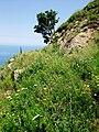 Monte Sant'Elia09.jpg