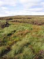 File:Moorland at Black Edge - geograph.org.uk - 548172.jpg