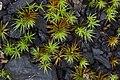 Moss (14383334813).jpg