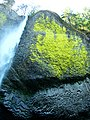 Moss on Lava, Wahkeena Falls, Oregon 9-06 (23159004296).jpg