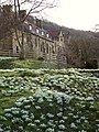 Mount Grace Snowdrops - geograph.org.uk - 684055.jpg