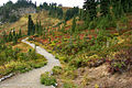 Mount Rainier National Park, Washington (22693369673).jpg