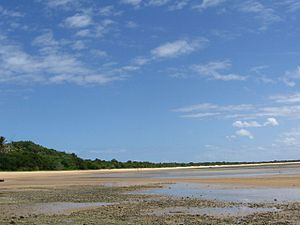 One of the five types of mangrove ecosystems f...