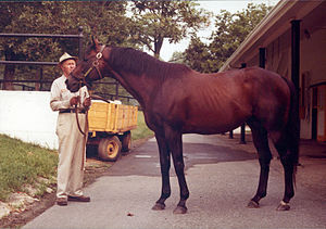Mr. Prospector - Mr. Prospector at Claiborne Farm in 1981