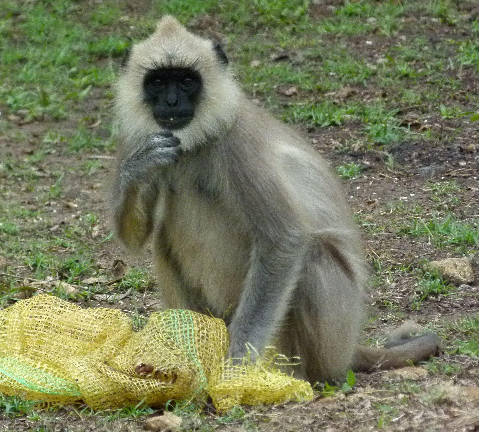 Sri lankan sinhala - 1 6