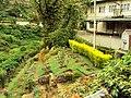 Munnar town - panoramio.jpg