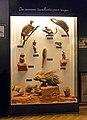 Musée zoologique de Strasbourg-Rongeurs.jpg