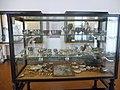 Museo archeologico nazionale (Naples) 2014 402.jpg