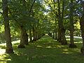 Mustasaaren puisto.jpg