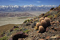 My Public Lands Roadtrip- Wilderness Wednesday in BLM California - Inyo Mountains Wilderness (18275714143).jpg