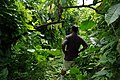 National cocoa advisor Dr John Konan stands amongst an overgrown cocoa farm. (10708851506).jpg