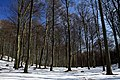 National nature resereve Jezerka in spring 2017 (4).JPG