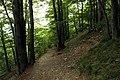 National nature reserve Milešovka in summer 2014 (5).JPG