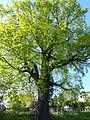 Naturdenkmal Pesteiche Oberpesterwitz (4).JPG