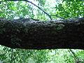 Nature of Langkawi (6).JPG