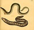 Naturgeschichte in Bildern mit erläuterndem Text (Taf. XVII) (6058657743).jpg