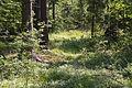 Naturschutzgebiet Trunnenmoor IMG 2661.jpg