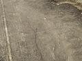 Nazca Lines, Kolibri, Peru (11341289944).jpg