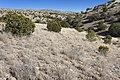 Near Chatfield Canyon - Flickr - aspidoscelis.jpg