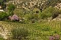 Nemea Wine-Olives Corinthia Peloponnese.jpg