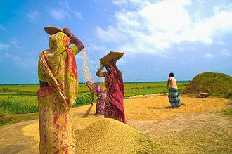 Nabanna - Harvesting preparation