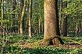 Nordkirchen, Naturschutzgebiet Ichterloh -- 2018 -- 2106.jpg