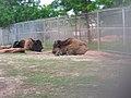 OKC Zoo May 2007 - 74 (497215622).jpg