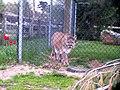 Oaklawn Farm Zoo, May 16 2009 (3539701684).jpg