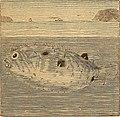 Ocean wonders- a companion for the seaside (1879) (14763166681).jpg
