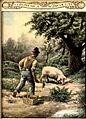 Olasz szarvasgomba vadász a disznójával.jpg